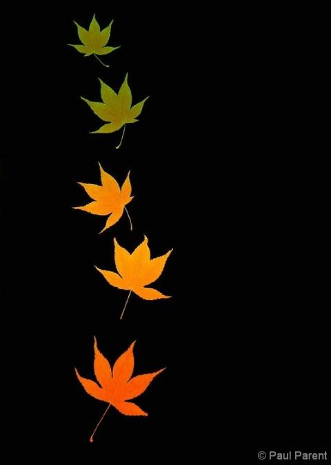 Falling Colors - ID: 4251755 © paul parent