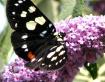 Butterfly enjoyin...