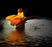 Butterfly on Wate...