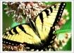 My 1st butterfly