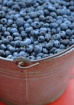 Blueberries in a ...