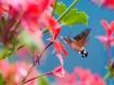 Hummingbird prete...