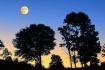 Hilltop Moonset