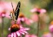 Swallowtail Butte...