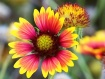 Texas Flower 2