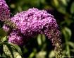 Beautiful Flower....