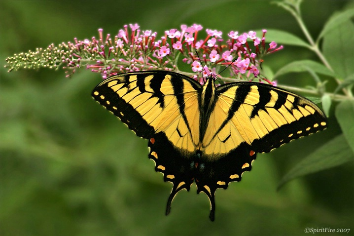 Elegant Wings
