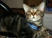 My new kitten, Gu...
