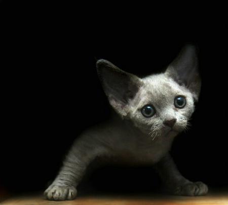 I am only a likkle kitten......