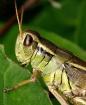 One Handsome Hopp...