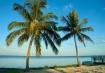 Twin Palms,  Flor...