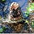 © Ronald Finegold PhotoID# 4518241: Alligator eating Turtle