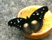 Butterfly Restaur...