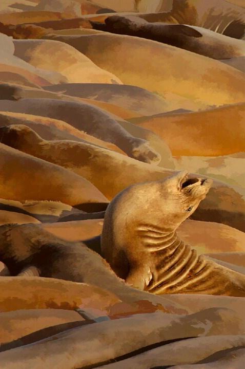 California Sea Lions - ID: 4544532 © Deborah C. Lewinson