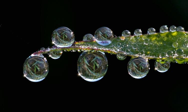 Dewdrop Sonata #2