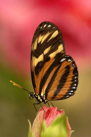 Brookside Butterfly
