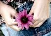 Hip Cone Flower