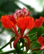 Beautiful Red....