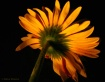 Orange Beauty.......