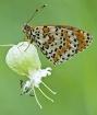 butterfly_on_flow...