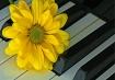 Keyboard Artist