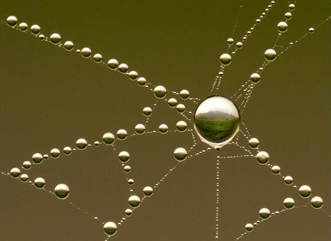 Web Pastoral