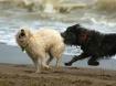 Socializing puppi...