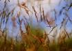 Field Flurry