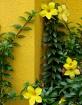 inherently_yellow...