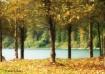 Lakeside Fall