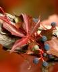 Autumn's Frui...