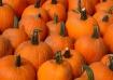 Pod of Pumpkins