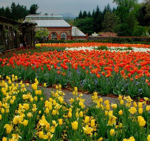 Springtime at the Biltmore