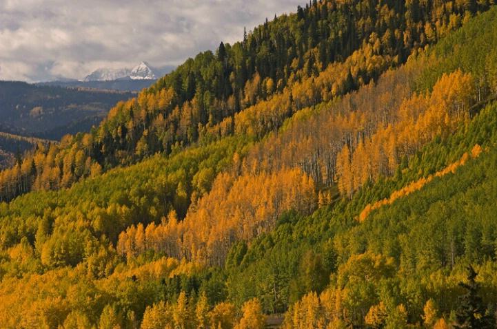 Autumn Aspen San Juan Mountains