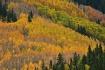 Autumn Aspen Elk ...
