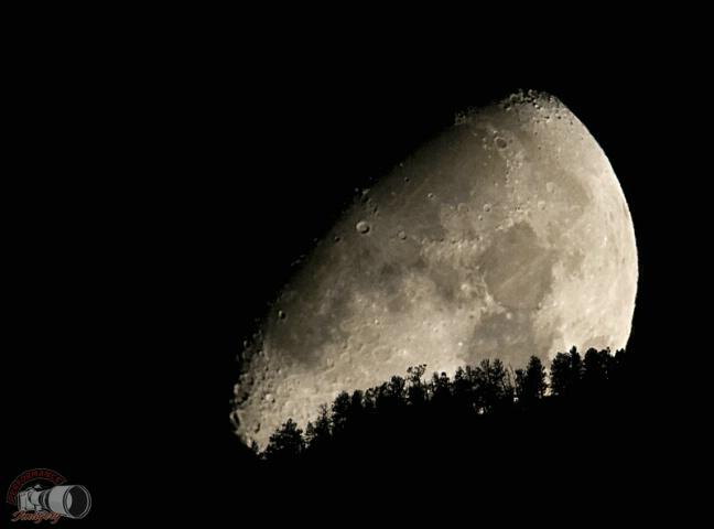 Lunar Trees
