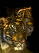 Brothers Tigre