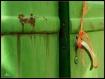 Rusty old door