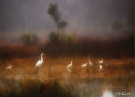 One Foggy Morn