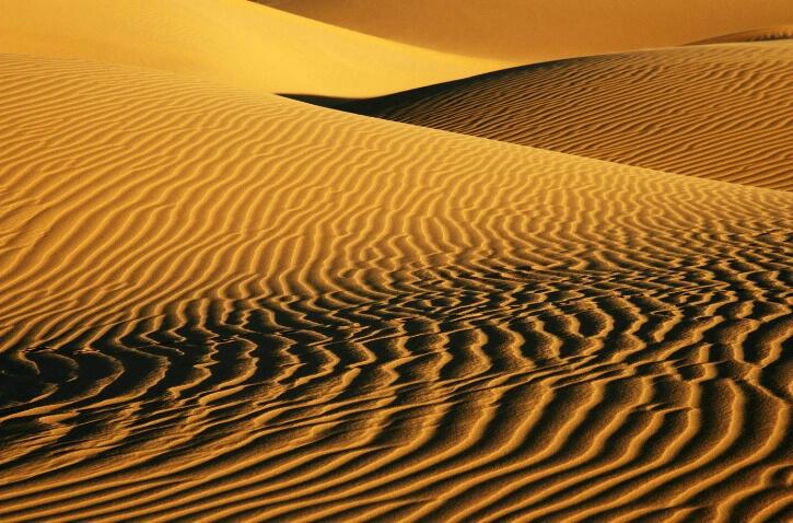 Dune Curves II - ID: 4926239 © Leslie McLain