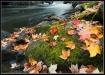 Fall at Brook Fal...