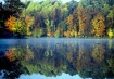Needwood Autumn M...