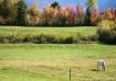 Autum Pasture