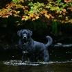 Autumn Dog Days