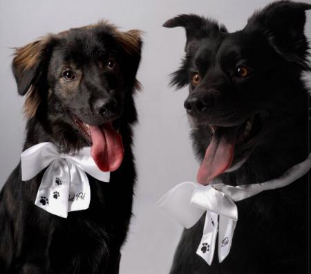 Logan & Lucy