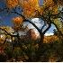 © Robert Elliott PhotoID # 5069614: Fall in Kolob Canyons
