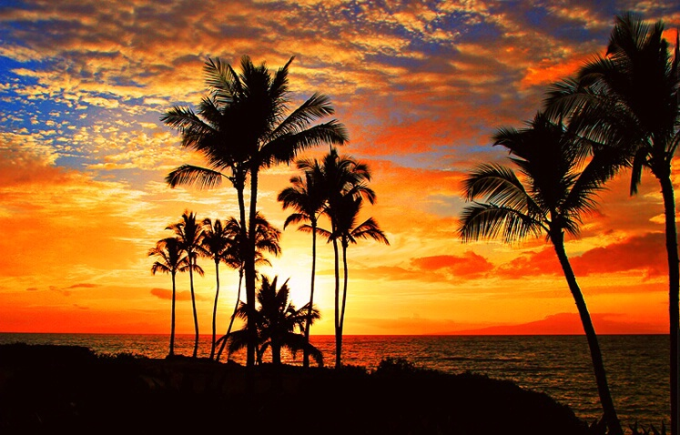 Tropical Sunset - ID: 5078649 © Janine Russell