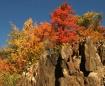 Autumn on the Roc...