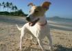 Canine Beachcombe...