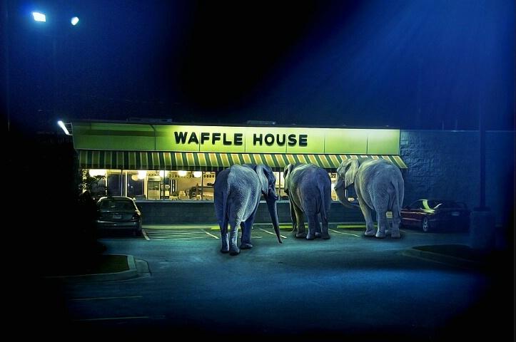 Vanishing Habitat: Elephants After Dark